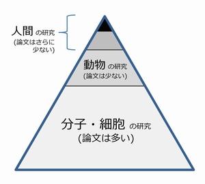 pyramid2-300x265