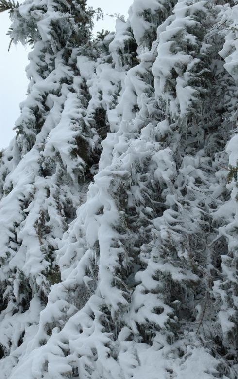 The pine trees were like Narnia - only the bad, evil witch part of Narnia.