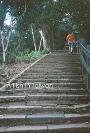 The climb up Elephant Mountain is steep, but well paved. (Photo Olympus Pen EE-3)