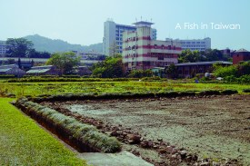 NTU Farm