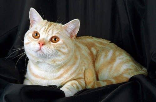 Как правильно кормить кошку, или, 6 мифов о питании кошки ...