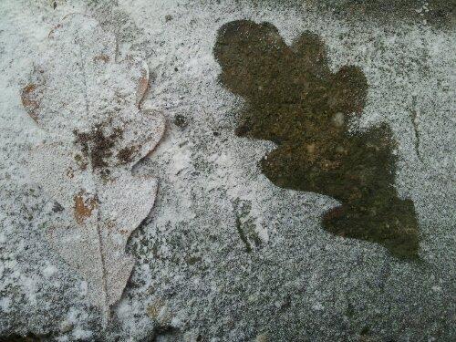 Silhouet van een eikenblad in het marmerstof na het beeldhouwen