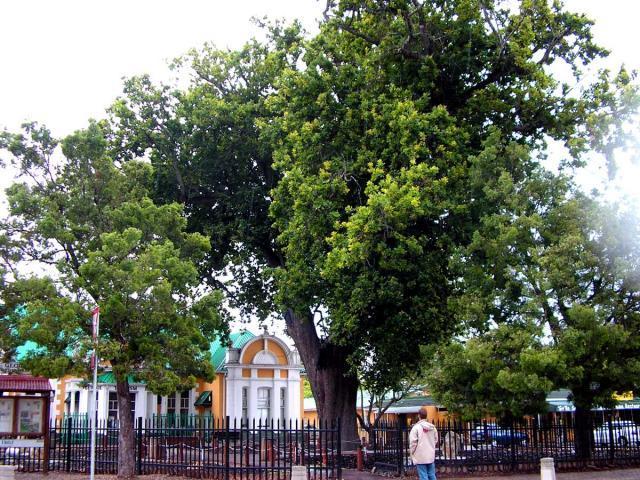 Slave Tree 4