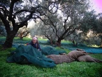 Andrea, la piqueuse d'olives au grand coeur... !