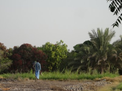 Oman - Le jardin