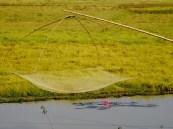 Inde : La pêche au lotus