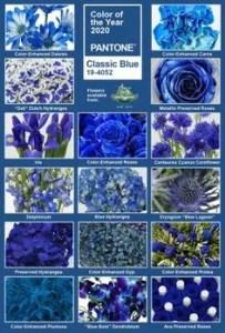 tipologie di fiori blue