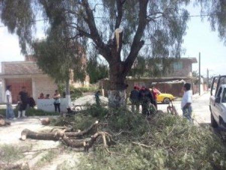El árbol no interfiere el tránsito ni la cancha.