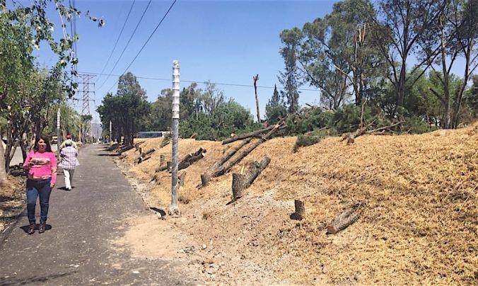 VIDEO: Vecinos protestan por tala de 50 árboles sanos en Naucalpan