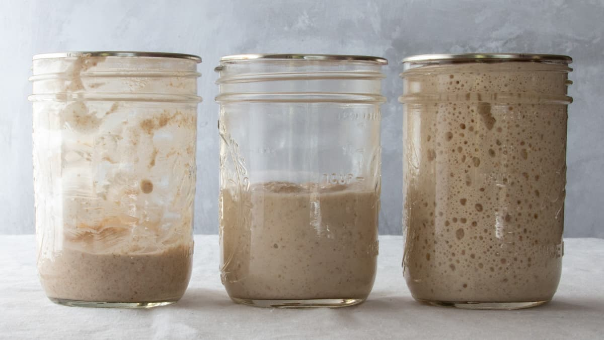 Fast and Easy Sourdough Starter