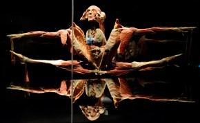 © Gunther von Hagens' BODY WORLDS, Institute for Plastination, Heidelberg, Germany. http://www.bodyworlds.com