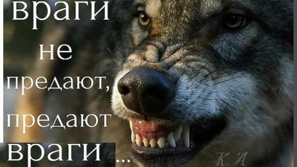 Статусы про волков одиночек - Афоризмо.ru