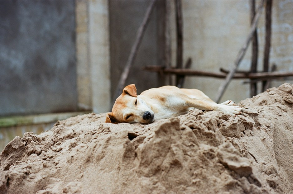 13 - Stray dog in Negash, Tigray