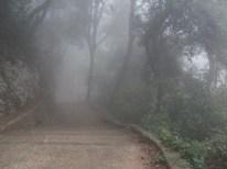 Montserrat Foggy Path