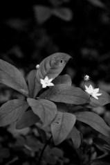 IMG_0260-Edit