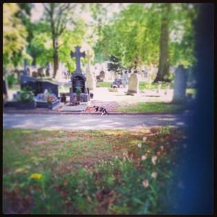 #cat #cemetery