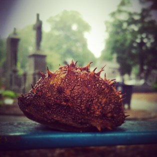 #bogue or #feature? #cemeteryinautumn