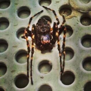 #spiderwoman #waiting