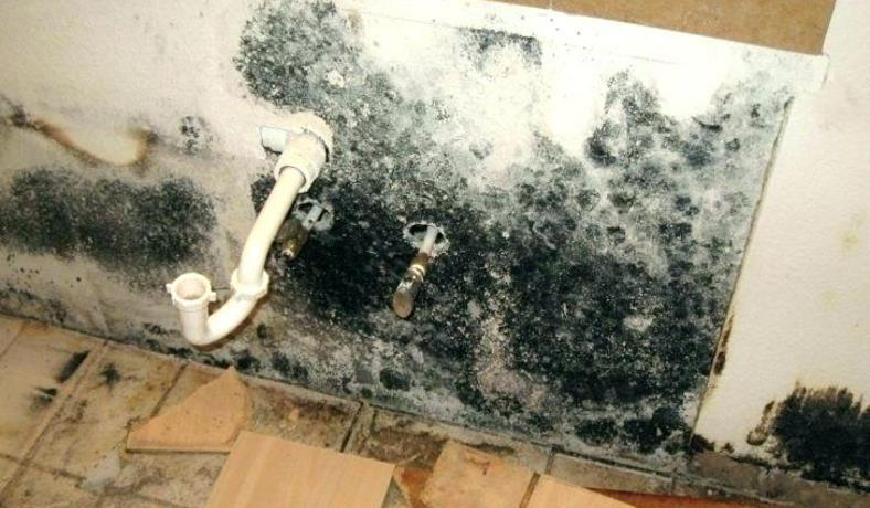 Mold Vs Mildew What Are The Differences Plus Black Mold Health Risks And More