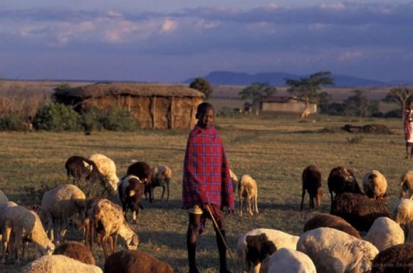 Young-boy-with-herd-Kenya