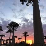 """恋愛成就のパワースポット!?マダガスカルの観光名所、バオバブの聖地""""ムルンダバ""""へ!"""