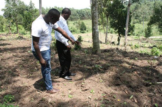 植えた苗の成長の具合を確認する