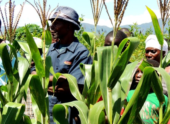 Farmers in the the trial field with improved maize varieties