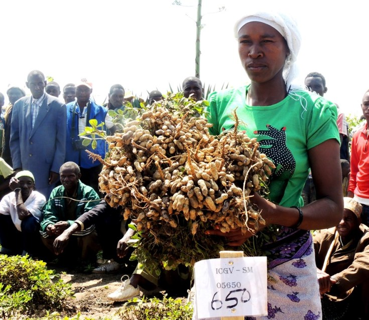 Another of the new improved varieties under trial for farmers to select