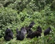 2 Days Gorilla Trekking Bwindi National Park