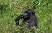 5 days Rwanda-Congo Gorilla Tour