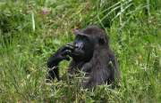 Gorilla Permit Bwindi Impenetrable National Park