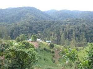 Gorilla Trekking Sectors Bwindi Impenetrable Forest National Park