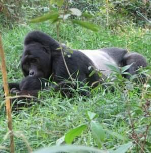 1 Day tour Virunga National Park