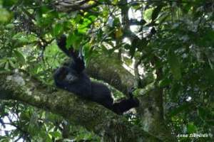 Gorilla Trekking Sectors Bwindi Impenetrable Forest National Park