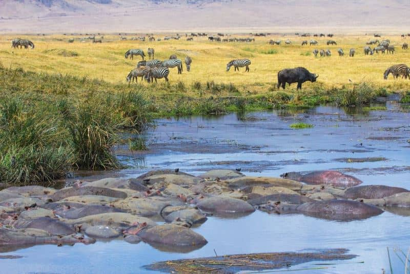 Safari Destination In Africa