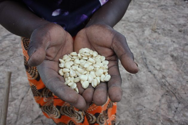 Growing Resilient Food Systems Post Covid Is Key For Africa