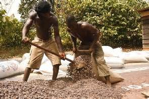 The smuggling of beans to Côte d'Ivoire may also have been a factor in the lower outturn