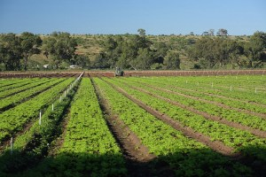 looking at further The Arabs are looking at investment opportunities in African agriculture.