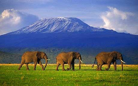 Tourism fetched record earnings in 2013