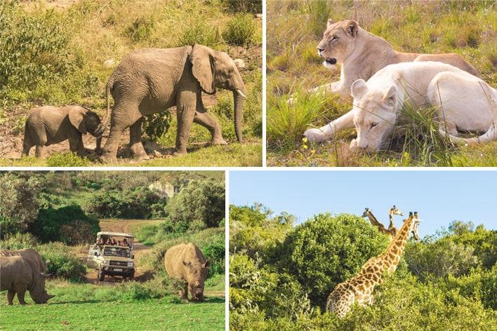 Africa Elite Travel ─ Addo Safari