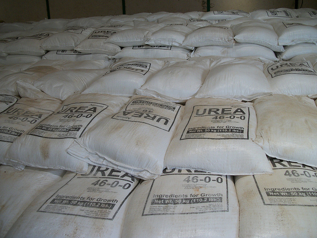 How to use Urea to Increase Protein Content in Fodder for Kenya Dairy Farming