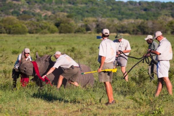 rhinos-conservation