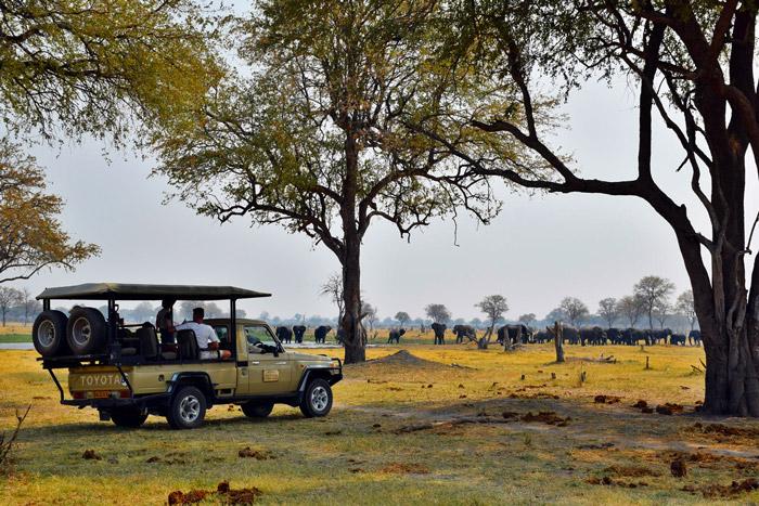 botswana-safari