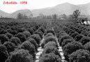 How Blacks ruined the World's biggest citrus estate in South Africa: Zebediela & other White Farms