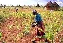 Video & Audio: Rhodesia to Zimbabwe: Do Blacks cause massive climate damage?