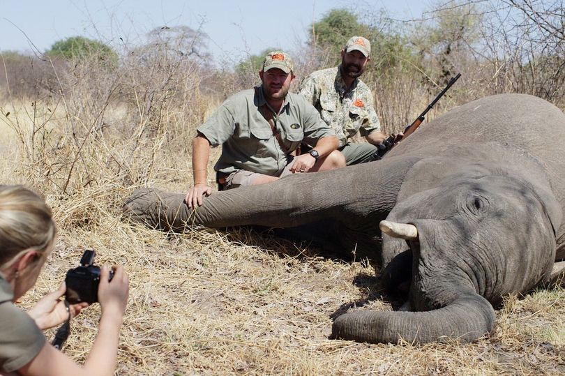 Trophy hunting industry WWF | Journal of African Elephants