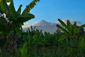 banana-trees-under-clear-sky-2063892