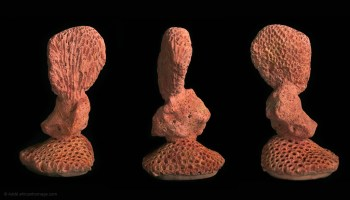 Similia similibus curantur, sculpture, (photo 14)