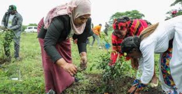 Des femmes plantant un arbre, Futura-Sciences, juillet 2019