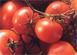 Le prix de référence des tomates fraîches